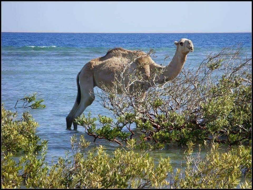 Мы предлагаем вам путешествие вдоль Нила, или заехать на Озеро Буруллюс